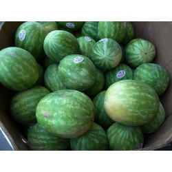 WHOLE WATERMELON (BIN) OFFER PRICE 1.2/Kg (MIN CHARGE OF 9KG)