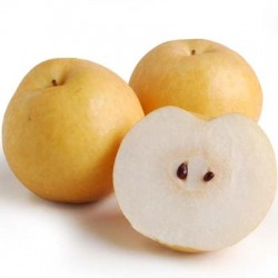 KOREAN PEAR 4PCS