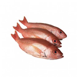 FROZEN ICELANDIC RED FISH (HEADLESS) 300/500 7KG