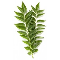 CURRY LEAF 100G