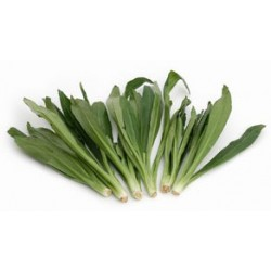 THAI PARSLEY 100G