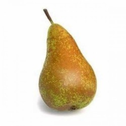 CONFERENCE PEAR (EACH)