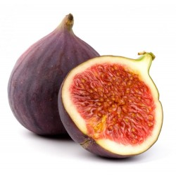 FIGS (EACH) (LONDON ONLY)