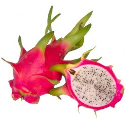 DRAGON FRUIT (EACH)