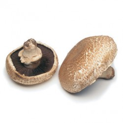 PORTOBELLO MUSHROOMS (2PCS)