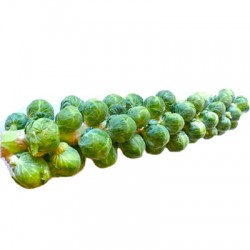 BRUSSEL SPROUTS WITH STEM 1KG